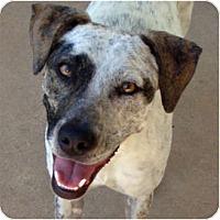 Adopt A Pet :: Bianca - Houston, TX