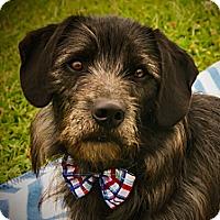 Adopt A Pet :: Jax - Princeton, KY