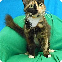 Adopt A Pet :: Cookie - East Hanover, NJ