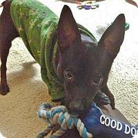 Adopt A Pet :: Mojo - Dayton, OH - Dayton, OH