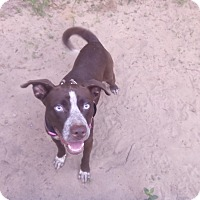 Adopt A Pet :: Bear - Pensacola, FL