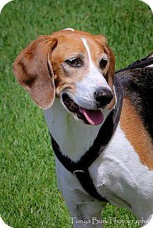 Hound (Unknown Type) Mix Dog for adoption in Princeton, Minnesota - Zelda