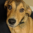 Adopt A Pet :: Kris