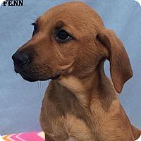 Adopt A Pet :: Fenn - East Sparta, OH