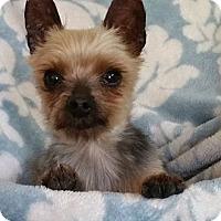 Adopt A Pet :: Prince Charles - Crump, TN