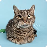 Adopt A Pet :: Tiger - Wilmington, DE