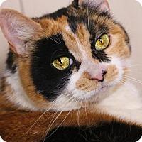 Calico Cat for adoption in Benton, Louisiana - Miss Kitty