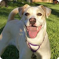 Adopt A Pet :: Bella - Jacksonville, FL