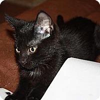 Adopt A Pet :: Merlot - Cypress, TX
