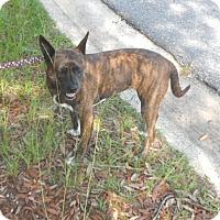 Adopt A Pet :: Co Co Channel - Pensacola, FL