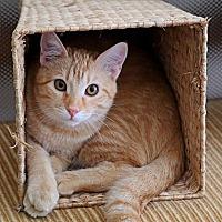 Adopt A Pet :: Teddy - Euless, TX