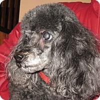 Adopt A Pet :: Jacques - Salem, OR