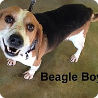 Adopt A Pet :: Beagle Boy-Smiles Now! - Olive Branch, MS