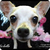 Chihuahua Mix Dog for adoption in Simi Valley, California - Michelle