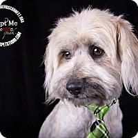 Adopt A Pet :: Beau - Lodi, CA