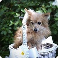 Adopt A Pet :: Hannah - Mandeville, LA