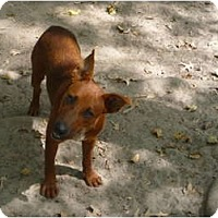 Adopt A Pet :: Red - Pointblank, TX