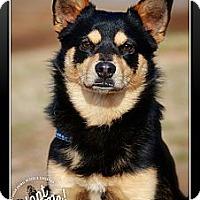 Adopt A Pet :: Elliott - Albany, NY