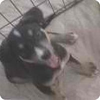 Adopt A Pet :: lemon - Phoenix, AZ