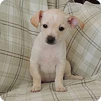 Adopt A Pet :: Gwynnie - La Habra Heights, CA