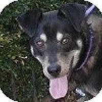 Adopt A Pet :: Dalton - Hamilton, ON