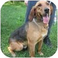 Adopt A Pet :: Jackson - Carrollton, GA