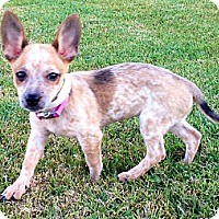 Adopt A Pet :: Fitch - Phoenix, AZ
