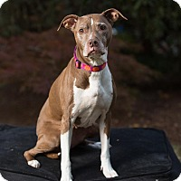 Adopt A Pet :: Ruby - Salem, OR
