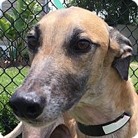 Adopt A Pet :: Ponce - Longwood, FL