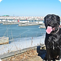 Adopt A Pet :: Betty - Virginia Beach, VA