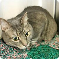 Adopt A Pet :: Tigger - Hilton Head, SC