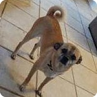 Adopt A Pet :: Woody - Las Cruces, NM