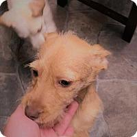 Adopt A Pet :: GiGi - Berwick, PA