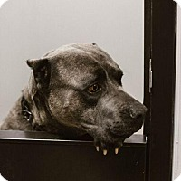 Adopt A Pet :: Bubbles - in Foster Care - Chino Hills, CA