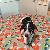 Adopt A Pet :: Weston - Kittery, ME