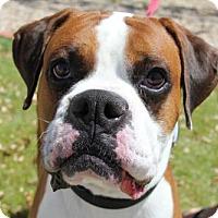 Adopt A Pet :: Draco - Phoenix, AZ