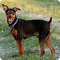 Adopt A Pet :: Jasper - Topeka, KS