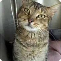 Adopt A Pet :: Sweet William - Moses Lake, WA