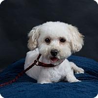 Adopt A Pet :: Dolly - Nuevo, CA