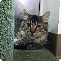Adopt A Pet :: Izzy - Trevose, PA
