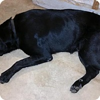 Adopt A Pet :: Buck Roger - Crocker, MO