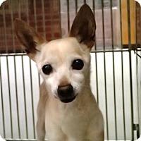 Adopt A Pet :: Leo - Creston, CA