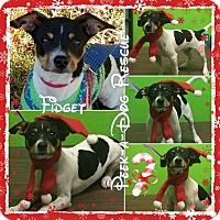 Adopt A Pet :: Fidget - South Gate, CA