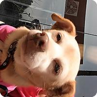 Adopt A Pet :: Mama - LAKEWOOD, CA