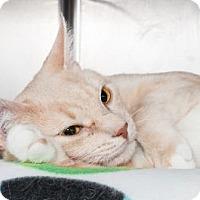 Adopt A Pet :: Surrey - Lowell, MA