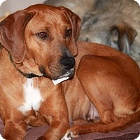 Adopt A Pet :: Honey - Adopted - Ontario, ON