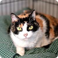 Adopt A Pet :: Luna - Hyde Park, NY