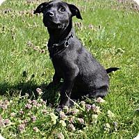 Adopt A Pet :: Baby Wanda - Rockville, MD