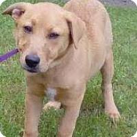 Adopt A Pet :: Perry - Orlando, FL