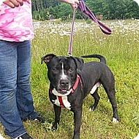 Adopt A Pet :: Clicker - Shelton, WA